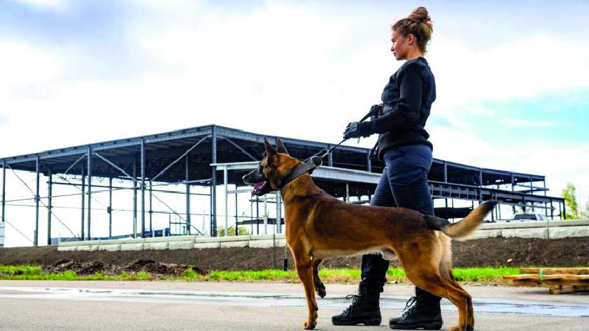 Maitre chien sécurité